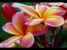 preserving flowers - preserving flowers in glycerin - preserving flowers...