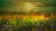 Summertime by creastefano. Please Like http://fb.me/go4photos and Follow @go4fotos Thank You. :-)