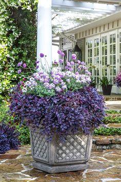 Plant a Warm Welcome | Free Garden Plan. Get dreamy color with Purple Daydream Dwarf Loropetalum.
