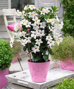 exotic flowers on pinterest gladioli rare flowers and unusual flowers. Black Bedroom Furniture Sets. Home Design Ideas
