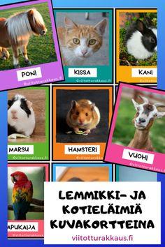 Kuvakortteja lemmikeistä ja kotieläimistä - Viitottu Rakkaus