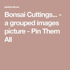 Bonsai Cuttings... - a grouped images picture - Pin Them All