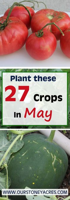 For zones 4 to 6 May is the time when the bulk of your warm weather crops are planted. This May planting guide will cover all the warm season crops that should be planted this month.