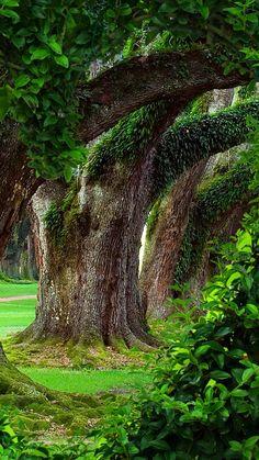 Beautiful Photos Of Nature, Beautiful Nature Wallpaper, Nature Photos, Amazing Nature, Beautiful Landscapes, Amazing Places On Earth, Beautiful Places To Travel, Landscape Wallpaper, Fantasy Landscape