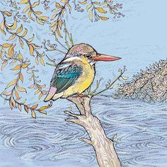 TW71 - Dwarf Kingfisher