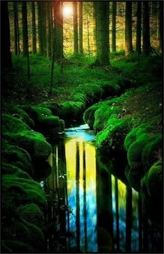 Stunning Picz: Reflection, Teijo, Finland