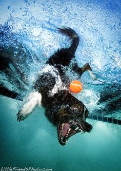 Underwater Dogs By Seth Casteel