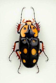 escarabajos, Sudamérica