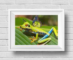 Ranatoro voladora - Animal Híbrido - Técnica: Montaje y retoque digital - Autor: Nicolás Casallas - DD2