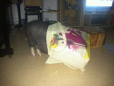 Schweini will einkaufen