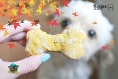 With Halloween around the corner we thought we'd dig through the world wide web for you and find some yummy but easy dog treat recipes with a spooky twist! Easy Dog Treat Recipes, Sausage Dogs, Halloween Pumpkins, Dog Treats, Dog Stuff, Dinosaur Stuffed Animal, Shapes, Apple, Lifestyle