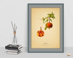 Pomegranate Vintage Botanical digital art poster picture antique home wall cubicle decor old image wall cubicle decor drawing watercolor art Old Images, Botanical Wall Art, Poster Pictures, Cubicle, Pomegranate, Watercolor Art, Digital Art, Antiques, Drawings