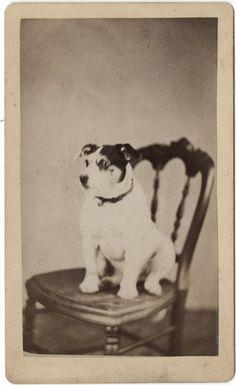 A Dog Named Hanna - Carte-de-Visite by Photo_History