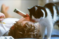 Sweet #cat