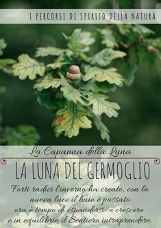 La Capanna della Luna – Spirito della Natura Herbs, Plants, Anime, La Luna, Herb, Cartoon Movies, Plant, Anime Music, Animation