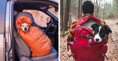 Ryan Carter voulait une excuse pour passer plus de temps avec son chien Cooper, alors il a lancé l'entreprise Camping With Dogs.