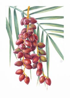 Botanical Sketches and Other Stories: Bloom 2015