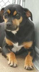 SMORES, HOUND is an adoptable Hound Dog in Defuniak Springs, FL. Smores is terrified in the shelter and desperately wants to find her forever family or a rescue that can work with her and teach her th...http://www.petfinder.com/petdetail/25907173