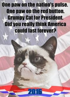 I'd vote grumpy cat before I'd vote trump with his racist /sexiest ass Grumpy Cat Humor, Cat Memes, Funny Memes, Grump Cat, Grumpy Kitty, Baby Animals, Funny Animals, Sarcastic Words, Grumpy Dwarf