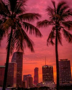 Sunset behind Palm trees in Miami Beach - Fushion News Miami Wallpaper, Summer Wallpaper, Miami Sunset, South Beach Miami, Miami Florida, Miami Skyline, Images Esthétiques, Les Continents, City Aesthetic