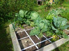 Vor- und Nachteile des Quadratgärtnerns - PROJEKT- Permakultur Plants, Permaculture, Projects, Lawn And Garden, Balcony, Plant, Planets