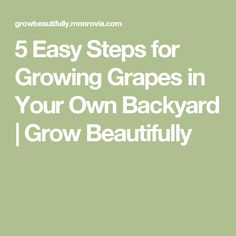 5 Easy Steps for Growing Grapes in Your Own Backyard | Grow Beautifully