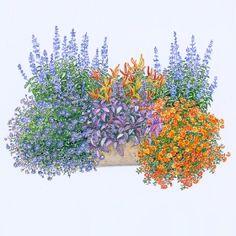Die 64 Besten Bilder Von Blumenkasten Gardens Balcony Plants Und