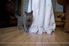 Kot na ślubie|https://www.facebook.com/AnnaTyniecFotografie | fotografia ślubna Wrocław | Anna Tyniec