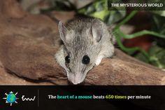 #animals #rats #facts