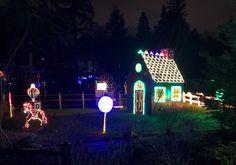 Zoo Lights at the Oregon Zoo — Rachel Bernhardt