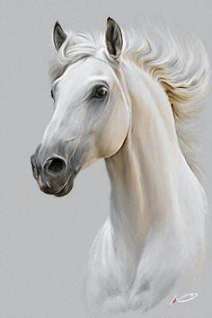 Horse by irudd on DeviantArt - Pferd Horse Drawings, Animal Drawings, Art Drawings, Horse Head Drawing, Drawing Animals, Graphite Drawings, Pencil Drawings, Painted Horses, Cross Paintings