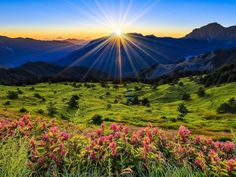 Hill Flower Shiny Sun