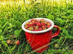 Strawberry, Fruit, Nature, Food, Naturaleza, Essen, Strawberry Fruit, Meals, Nature Illustration