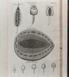 Anatomy of Plants (1681)  by Nehemiah Grew  If family names are derived from occupations, Nehemiah Grew's ancestors must have been just as excited about plants as he was. His landmark work Anatomy of Plants was the first to note that a plant's stamen is a male organ, with pollen being the seed. The text is also remarkable in its unprecedented detail, as seen above, with Grew even getting down into the first microscopic descriptions of pollen.