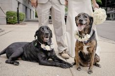 Dogs in weddings - Daniel Taylor Photography. Wedding photographers