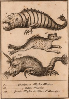 ancient nautical charts creatures - Google Search                                                                                                                                                     More