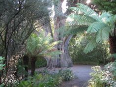 Just one of the amazing places to see.......Christchurch Botanical Garden, New Zealand