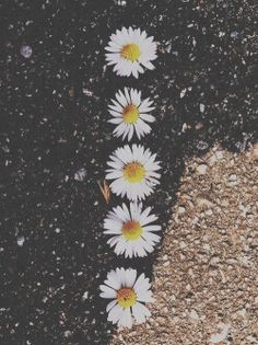 love photography hair couple Black and White tumblr fashion food quotes beautiful summer skinny hipster vintage indie Grunge flower flowers Clothes nature travel beach girly Daisy long hair artsy pale Faded daisies soft grunge