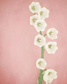 Soft Pink Decor, Pink Flower Picture, White Lily of the Valley, Nursery Decor, Pastel Pink Art, Minimalist Decor, Flower Photography.