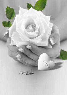 Trouxe para você essa rosa branca linda e pura como você!!!