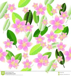 Illustration about Pink Plumeria on white background. Illustration of plumeria, background, frangipani - 100543769 Page Borders, Illustration, Plants, Pink, Image, Illustrations, Plant, Pink Hair, Roses