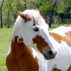 The gorgeous painted horse