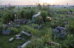 Urban Gardening at the former Tempelhof Airport Berlin via ZEIT ONLINE