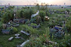Urban Gardening at the former Tempelhof Airport Berlin via ZEIT ONLINE
