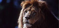 En France, les zoos s'adaptent à la canicule