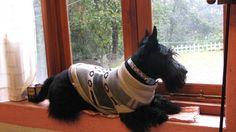 Sancho en la ventana