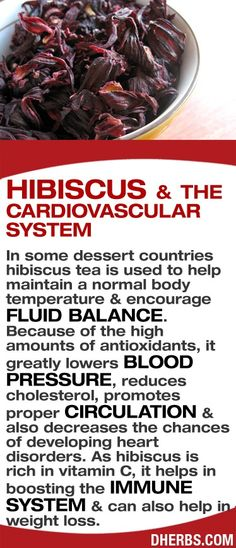 Hibiscus & the cardiocascular system.