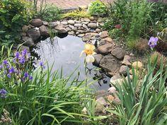 Small Backyard Ponds, Backyard Water Feature, Small Garden Nature Pond, Garden Pond Design, Bog Garden, Ponds For Small Gardens, Small Ponds, Natural Pond, Small Natural Garden Ideas