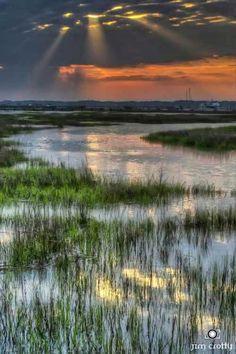 South Carolina marsh
