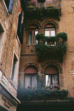Urban balconies decked out in mini-gardens with vines and window-boxes